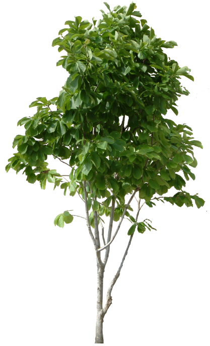 tree_PNG230